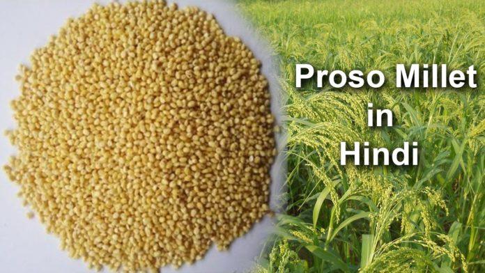 Proso Millet in Hindi