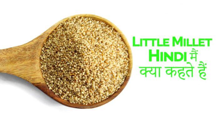 Little millet in hindi